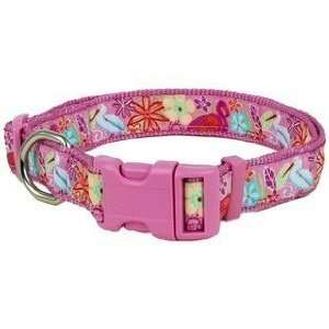 Douglas Paquette Nylon Dog Collar EVERGLADES 3/8x9 12